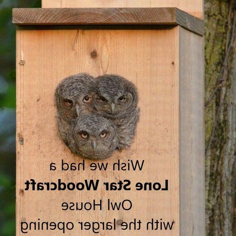 Veteran made Owl Nesting Box - Screech Owl House