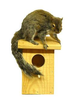 Squirrel On Birdhouse Taxidermy Wall Mounted Animal Statue