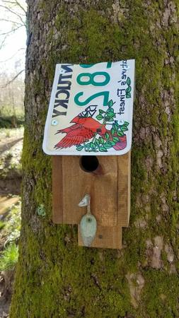 Unique Kentucky Cardinal License Plate Birdhouse Handcrafted